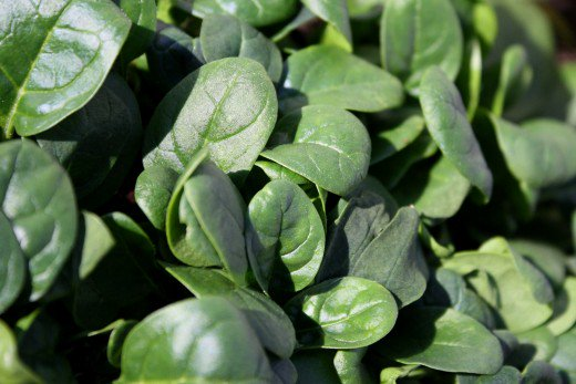 top 10 weight loss food- spinach